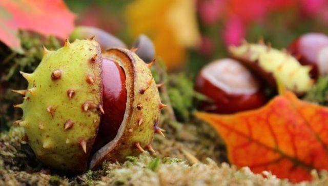 Ökumenische Sozialstation Heidenheimer Land – Herbstfest